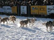 Rookie Musher Wins 2011 Yukon Quest Sled Race