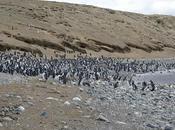 Penguins Punta Arenas