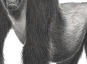 Half Primates Threatened With Extinction