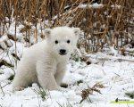 Tragic Loss Knut