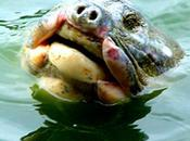 Hanoi's Favourite Turtle Treatment