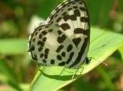 Featured Animal: Butterfly