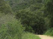 Pueblo Trail Montecito