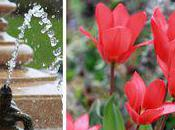 Flowers Blooming Lyndale Park