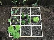 Billion Acts Green with Square Foot Salad Gardens