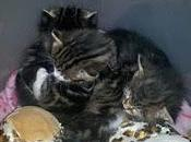 Amazing Kitten Experience... Brink Death