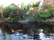 Exotic Plants Fish