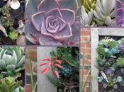 Make Succulent Wall Planter