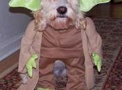 Halloween Pets Costume!