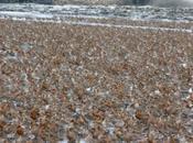 China's Great Wall Threatens Quarter World's Shorebirds