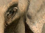 Ethical Elephant Encounter Thailand