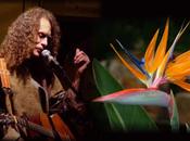 Anti-Apartheid Activist Tony Bird Concert 12/6 Washington Square, Brookline