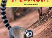 BOOK! Smart Lemur?