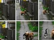 Best Friends Meet Every Walk