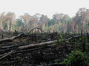 Causes Effects Environmental Degradation
