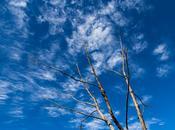 Polariser Blue