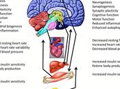 Exercise Intermittent Fasting Improve Brain Plasticity Health