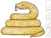 Draw Snake with Texture