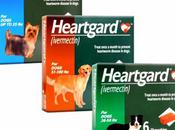 Drug Head Lice Heartworm Shows Promise Against Alcohol Abuse
