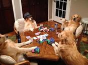 Funny Dogs Must