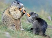 Adorable Animals Love Share Their Food