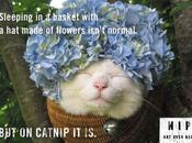 Funny Cats Just High Catnip!