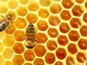"Honey ""Super Bugs"""