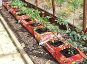 Welcome 2015 Tomato Growing Season