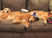 Dogs Recovering From Patriots #SuperBowl Win!