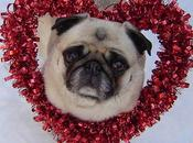 Check Paws Reaction Valentine's Headquarters!