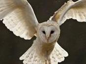 Operation Owl: Boxes Help Save These Beautiful Bellwethers Biodiversity
