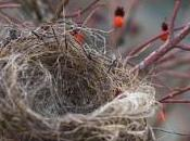 Empty Nest Revisited