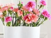 Sunday Bouquet: Colorful Carnations Your Aalvar Aalto Vase