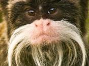 Showy Monkeys, Neanderthal Bling More Human Evolution Weekly Update (20/3/15)
