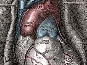 Aging Heart: Affects Cardiovascular System
