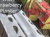 IKEA Strawberry Planter