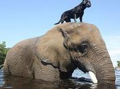Unusual Animal Friendships That Will Melt Your Heart