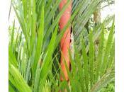 Many Uses Bamboo