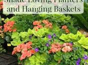 Hanging Baskets Shade