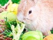 Eggcellent Clean Eating Salad