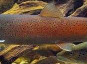 Salmons Danube Shrinking Hunting Grounds