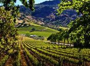 Thread™ Napa Narrative Shafer Vineyards