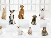 Volkswagen Turns Bark Side Star Wars-inspired Canine Chorus Teaser