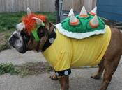 Animals Bowser Fancy Dress Costumes