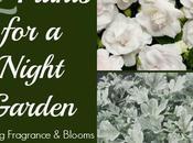 Night Garden Plants