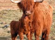 Strange, Rare Unusual Breeds