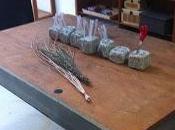 Workshop: Mystery Magic Perfumery