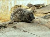 Today Best Time Saimaa Ringed Seal