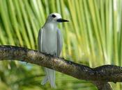 Walking Wild Side: Chagos Archipelago