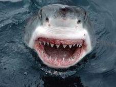 Grim Tale Global Shark Declines